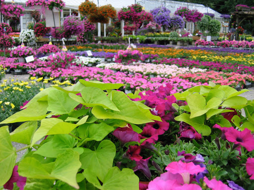 Flower Nursery Trip To Get Your Home Ready for Spring!