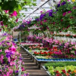 Whiteford Greenhouse